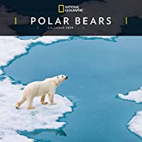 Polar Bears Nat Geo W 2019 (Square)