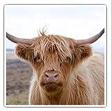 Impresionantes pegatinas cuadradas (juego de 2) 7,5 cm – High land Cow Dartmoor Devon Divertidas calcomanías para portátiles, tabletas, equipaje, reserva de chatarras, neveras, regalo genial #45328