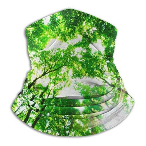 Sole de la mañana pronto el bosque verde impresión Seaml máscara facial pañuelo banda para el cuello gorro para el polvo al aire libre Festival de música Artículos deportivos