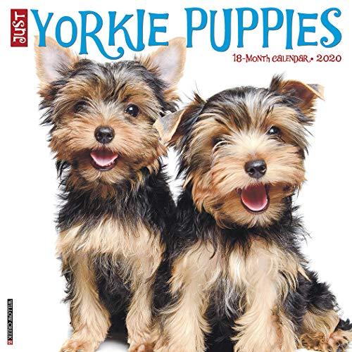 Best calendars yorkies for 2021