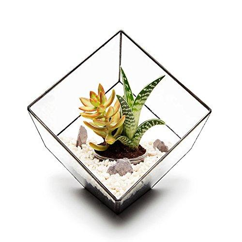 23CM HIGH CUBE TERRARIUM MET LIVE SUCCULENT PLANTS geleverd volledig gemonteerd, terrarium kit of leeg terrarium. Hoogwaardige glas- en loodvrije blikconstructie L22cm x H23cm x B22cm Exclusieve designer geometrische terrariums van The Urban Botanist. Stijlvolle kamerdecoraties voor thuis, kantoor, evenementen, interieurontwerpen