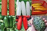 ADB Inc 50 + 50 semi 100% Semi Vero cetriolo Rosso Giallo Bianco cetriolo Sette tipi di scelte Balcone Giardino frutta e verdura (cetrioli Mix)