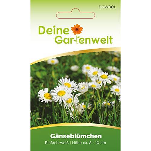 Gänseblümchen Blumensamen | Mehrjährig | Bellis perennis Samen | Gänseblümchensamen für Rasenflächen und Steingärten