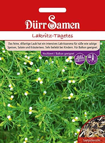 Dürr Samen 4362 Lakritz-Tagetes (Tagetessamen)