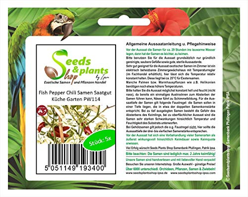 Stk - 5x Fish Pepper Chili Samen Saatgut Küche Garten PW114 - Seeds Plants Shop Samenbank Pfullingen Patrik Ipsa