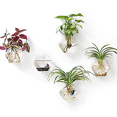 Mkono 2 Pack Wall Hanging Plant Terrarium Glass Planter, Hexagon Shape