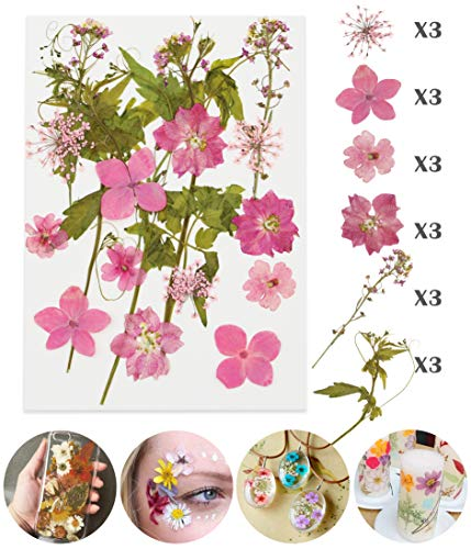 Longwu Real Dried Pressed Flowers Assorted Colorful Daisies Leaves Hydrangeas for DIY Candle Resin Jewelry Nail Pendant Crafts Making Art Floral Decors Pink