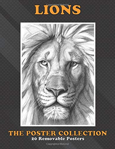 Poster Collection: Lions Lion G6 Animals