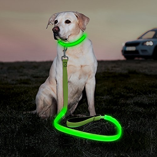 Illumifun LED Dog Leash, USB Rechargeable Glow in The Dark Pet Leash, 47.2inch Nylon Light Up Dog Lead for Your Night Dog Walking (Green)