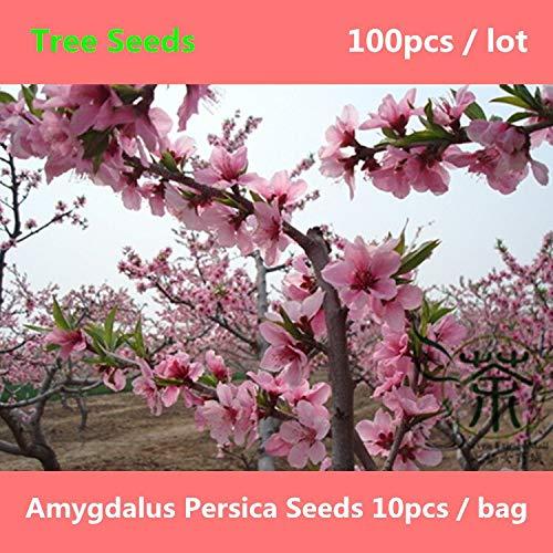 RETS Weit verbreitet Anbau Beautifying Prunus persica 100pcs, Familie Rosaceae Pfirsich, Laub Peach