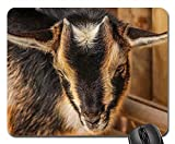 Mouse Pads - Goats Lambs Baby Animals Mammals Furry Furs