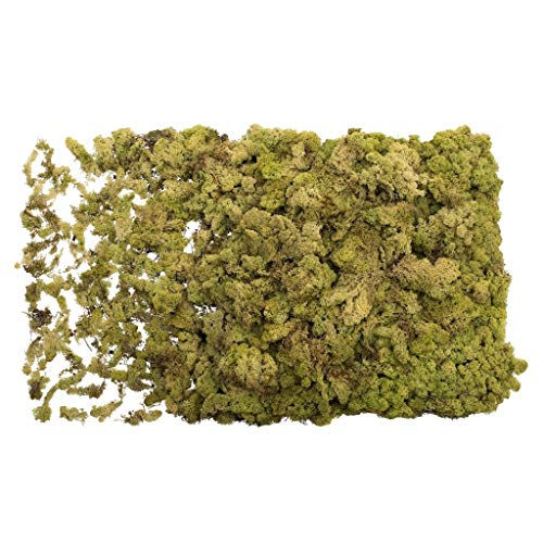 Vickerman 652237 - Lt May Green Reindeer Moss 8.8 lbs/Box (H4RDM105) Dried and Preserved Foliage