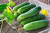 Seeds Cucumber Lyalyuk...image