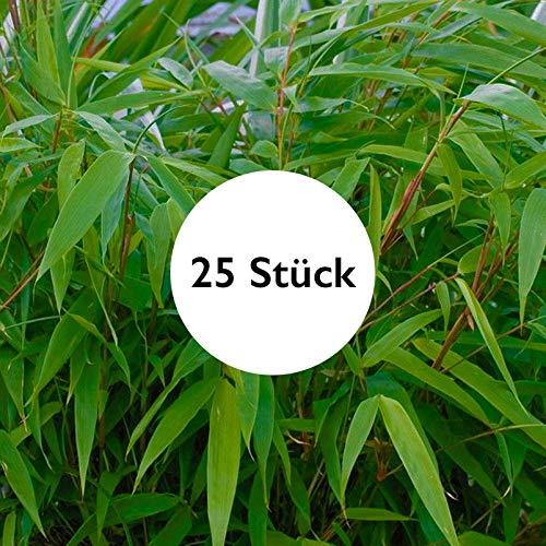 25er Set Bambus