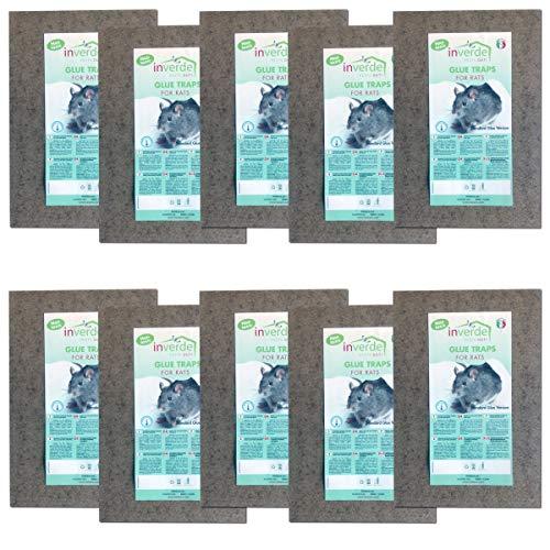 NUISIPRO 10 Lots = 20 plaques Bois de glu Anti Rat et Anti Souris