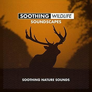 Soothing Wildlife Soundscapes