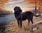 Animal Black Dog in The Hay Diamond Painting Kits, Landscape Paint with Diamond by Number Kits 5D Full Drill Round Rhinestone Embroidery Cross Stitch Home Wall Décor 12X16 inch