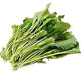 Semi di senape Potherb, semi di senape Potherb, verdure arrostite, colza a nove teste, 300 grani