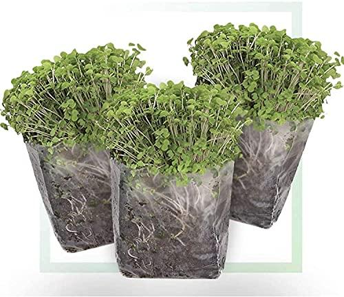 Window Garden Indoor Broccoli Microgreens Seed Starter Vegan Growing Kit –...