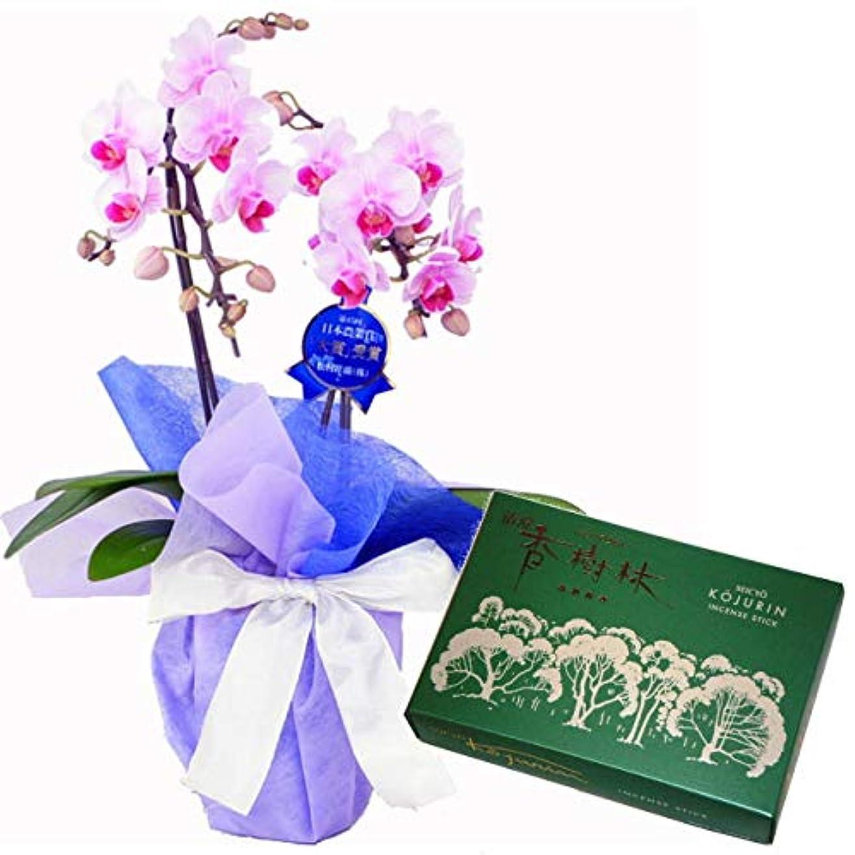 ロボットリテラシー必要条件ミディ胡蝶蘭 ピンク色 2本立ち 玉初堂のお線香 清澄香樹林 大バラ #6681 セット