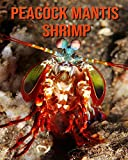 Peacock Mantis Shrimp: Amazing Facts about Peacock...
