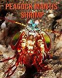 Peacock Mantis Shrimp: Amazing Facts about Peacock Mantis Shrimp
