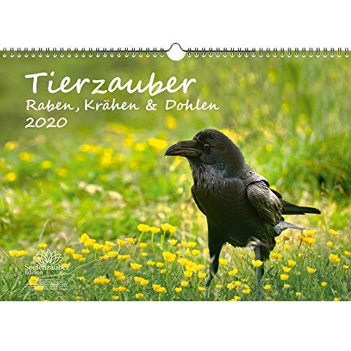 Tierzauber Raben, Krähen und Dohlen DIN A3 Kalender 2020 - Seelenzauber