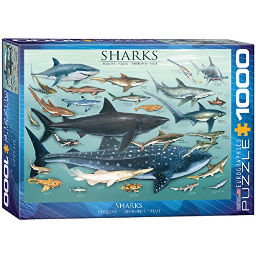 1000 piece shark puzzle - 1