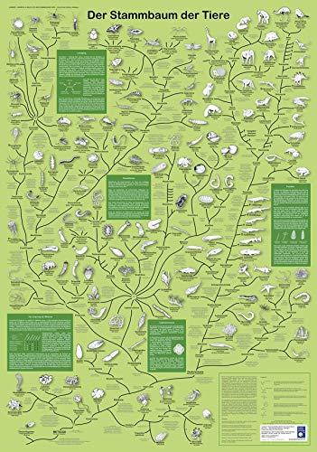 Der Stammbaum der Tiere (Planet-Poster-Box)