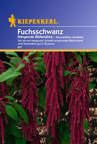 Sperli Blumensamen Fuchsschwanz Hängende Blütenähre, grün
