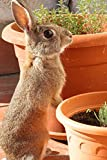 A Brown Bunny with Terracotta Pots Journal: 150 page lined notebook/diary
