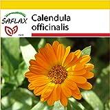 SAFLAX - Set de cultivo - Botón de oro - 50 semillas - Con mini-invernadero, sustrato de cultivo y 2 maceteros - Calendula officinalis