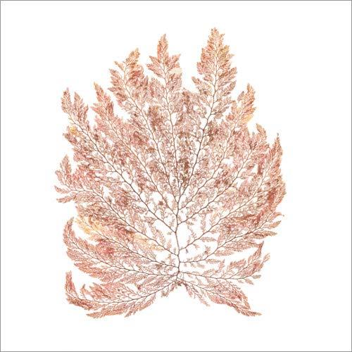 Posterlounge Hartschaumbild 70 x 70 cm: Pazifische Meerespflanze III von Wild Apple Graphics