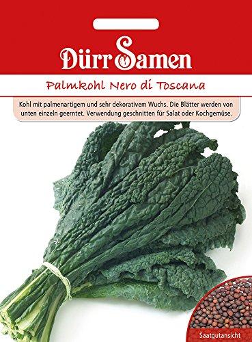 Palmkohl Nero di Toscana | Palmkohlsamen von Dürr-Samen