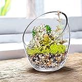 """KNIKGLASS Clear Slant Cut Bubble Bowl, Fish Bowl & Plant Terrarium, Candy Jar Slant Cut Globe Vase Center Piece, Round Flower Vase, (6.9"""" Tall .5.5"""" Wide) …"""