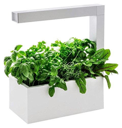 Tregren Herbie blanc 6 plantes, Jardinière et Potager d'intérieur Autonome pour herbes...