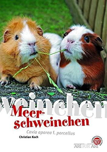 Meerschweinchen: Cavia aperea f. porcellus