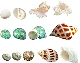 Luckybaby Shell Hermit Crab Shells Large Medium Turbo Seashell Natural Sea Conch