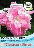 【輸入種子】 Thompson&Morgan MORNING GLORY Spilit Second Double モーニング・グローリー(朝顔)・ スピリット・セカンド・ダブル トンプソン&モーガン