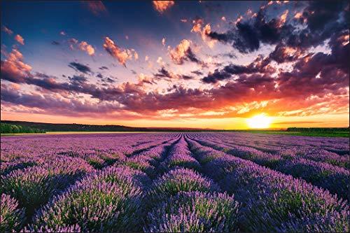 Muralo Fototapete Landschaft 240 x 360 cm Vlies Tapete Wandtapeten Lavendel Feld Himmel Wohnzimmer Schlafzimmer Moderne Wandbilder XXL Natur Panorama Wand Dekoration
