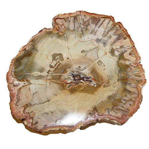 Baumscheibe versteinerte Holz Scheibe aus Madagaskar ca. 80-90 mm ca. 150 Millionen Jahre alt.(4682)