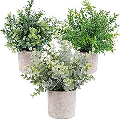 OUTLEE 3 Pack Mini Artificial Potted Plants Faux Eucalyptus Plants Boxwood Rosemary Greenery in Pots Small Houseplantsfor Home Decor Office Desk Shower Room Decoration