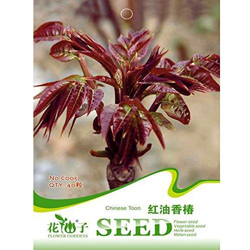 40Stück Toona sinensis Samen Baum Healthy Organic Vegetables Herb Pflanzen