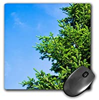 3dRose Mouse Pad Bright Green Spruce Tree Branches, Blue Sky - 8 by 8-Inches (mp_264155_1) [並行輸入品]