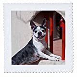 3dRose qs_93012_10 Boston Terrier Dog, Window with Red Bars