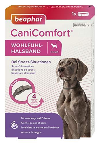 beaphar CaniComfort Wohlfühl-Halsband für Hunde, Beruhigungsmittel für Hunde mit Pheromonen, Bei Stress-Situationen