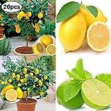 zhouba - semi di limone per piante da giardinaggio, 20 pezzi rari semi di limone per la casa e il giardino a crescita rapida
