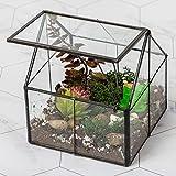 Ferrisland Glass Plant Terrarium Container Wardian Case Indoor Succulent Planter w/Door - 5.0'x4.3'x4.3'