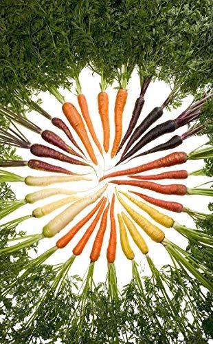 Möhren/Karotten *Bunter Mix* 200 Samen