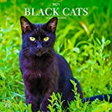 Black Cats 2021 12 x 12 Inch Monthly Square Wall Calendar with Foil Stamped Cover by StarGifts, Animals Feline Pets